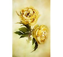 Painted Peonies Photographic Print