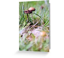 Mid Focal 2 Greeting Card
