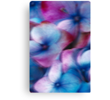 Hydrangea in the wind Canvas Print