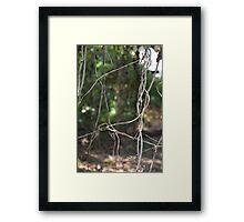 NATURAL WEB Framed Print