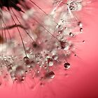 New Year's Pink Champagne - Happy New Year! by micklyn