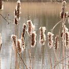 Rushes by karenlynda