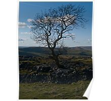 Dales Tree Poster