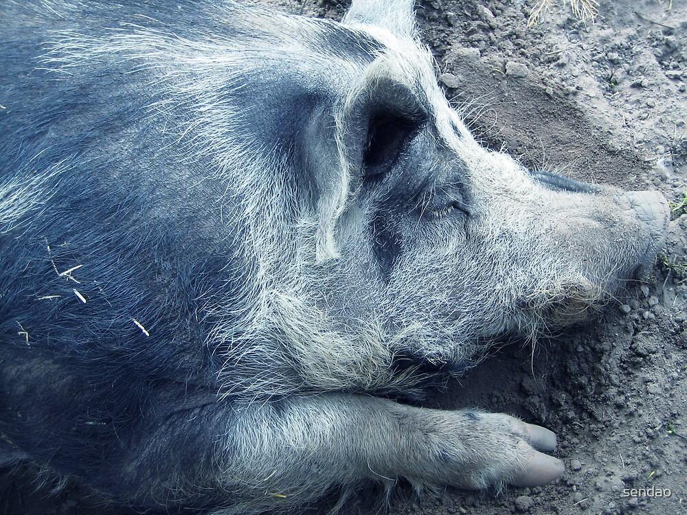 Mister pig...! by sendao