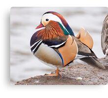 Mandarin Duck  1 Canvas Print