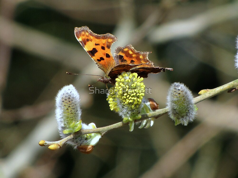 Another Comma by Sharon Perrett