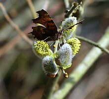 And yet another Comma by Sharon Perrett