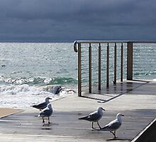 the light!  at Burnie beach, with silver gulls by gaylene