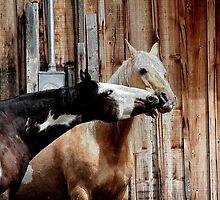 Two Paints Horse Equine Artwork by NaturePrints