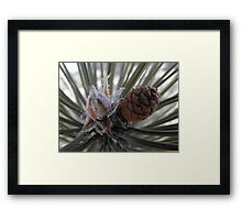 A Precious New Pine Cone Framed Print