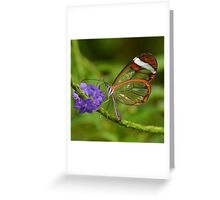 Stained Glass...... Greeting Card