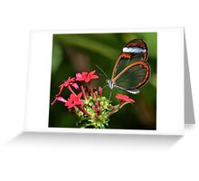 Wings of Glass.......... Greeting Card