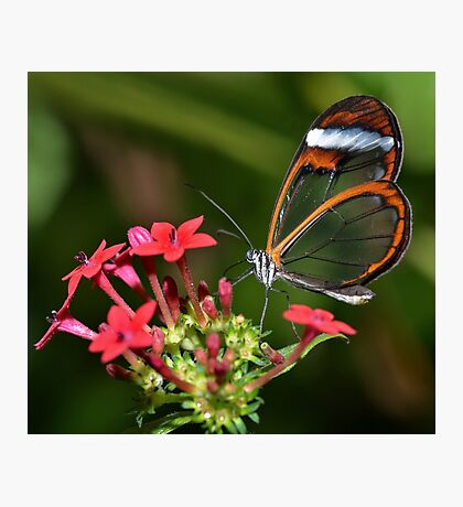 Wings of Glass.......... Photographic Print