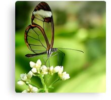 Glasswing Butterfly Visit Canvas Print