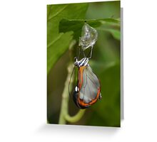 How Glasswings are made.............. Greeting Card