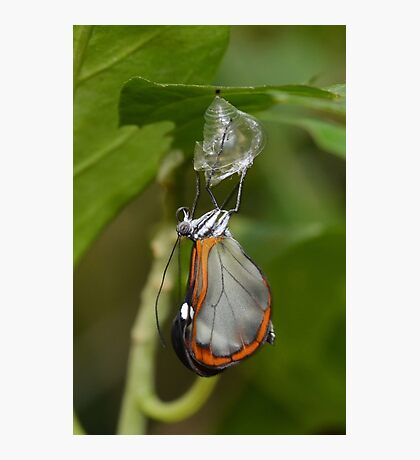 How Glasswings are made.............. Photographic Print