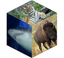 The Nature Box Photographic Print