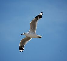 Seagull on the way to lunch by Andy Smith