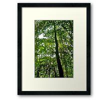 TALL LEAF Framed Print