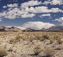 Chihuahuan Desert, Texas by Tamas Bakos