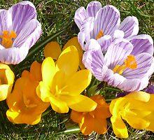 flowers by Gracie Borgnet