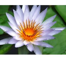 Blue Lotus 2 Photographic Print