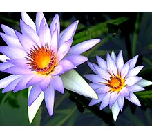 Blue Lotuses Photographic Print