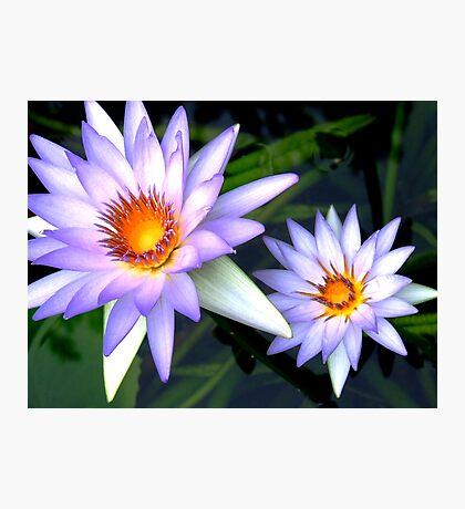Blue Lotuses Photographic Print
