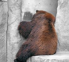 Shy Brown Bear by Brian Kaehny