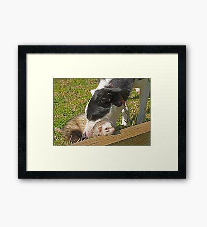 Head on the Chopping Block!   Framed Print