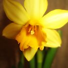 Narcissus by RobertCharles