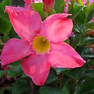 Pink Petals by MichelleR