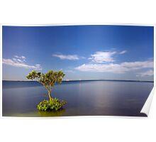 Moonlit Mangrove Poster