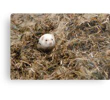 Seaweed Mole. Metal Print
