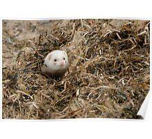 Seaweed Mole. Poster