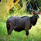 Kudu, Malawi by Tim Cowley
