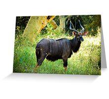 Kudu, Malawi Greeting Card