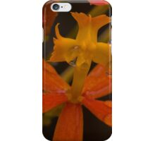 Australian native orchid (orange) iPhone Case/Skin