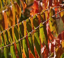 Sumac Back-lit in Pennsylvania Fall by Anna Lisa Yoder