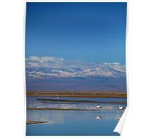 Flamingo Reflections, Salar de Atacama, Chile Poster