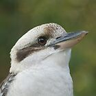 Kookaburra by Andrew Trevor-Jones