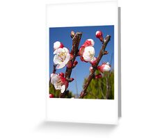 Red and White Blossom Greeting Card