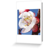 A Hint of Apricot Greeting Card