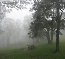 Seat under trees in a fog. by Marilyn Baldey