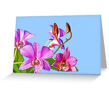 Orchid: Ortgies Cattleyopsis Greeting Card