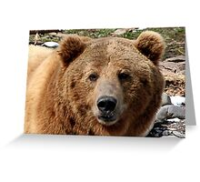 Brutus the Grizzly Film Star Greeting Card