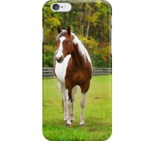 Charming Pinto Horse iPhone Case/Skin