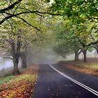 Early Autumn in Mt Wilson NSW Australia by Bev Woodman