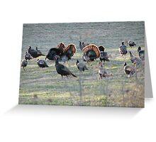 Mating Season Greeting Card