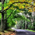 A Hint of Autumn - Mt Wilson NSW Australia by Bev Woodman